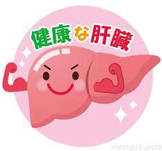 元気な肝臓