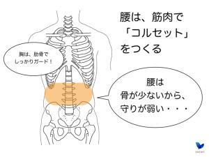 腰は筋肉で支える
